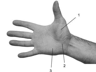 ладонное возвышение большого пальца