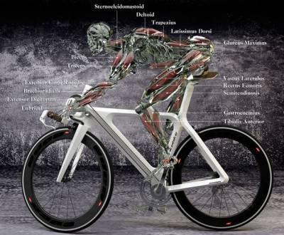 физическая нагрузка на мышцы велосипедиста
