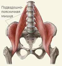 подвздошные мышцы