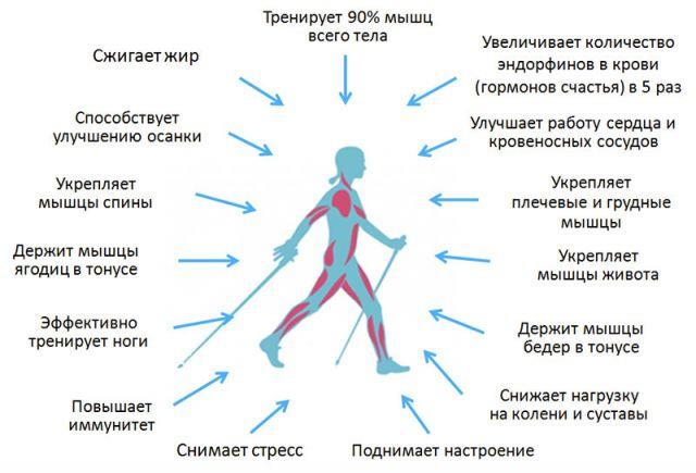 польза от спортивной ходьбы