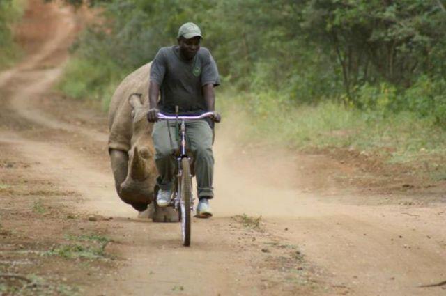 на байке от носорога